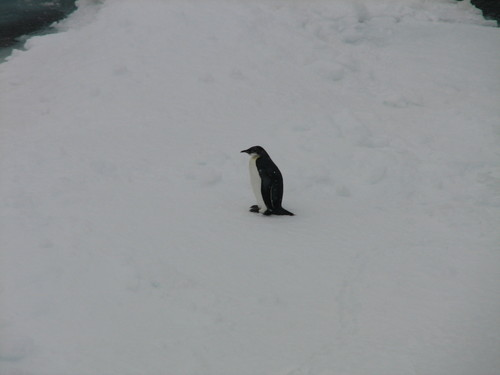 32_Emp_Penguin