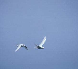 3_Snow_P_in_flight