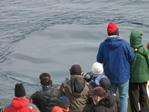 41_whale_footprint